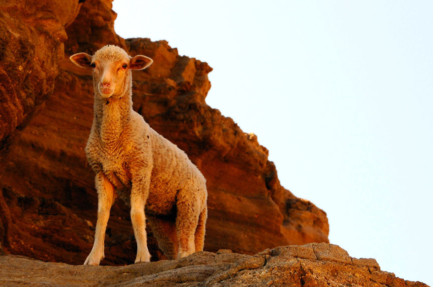 sheep_cliff_retina